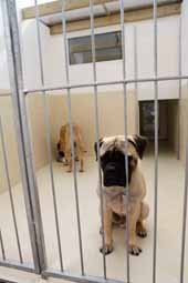 image of dog kennels with two dogs inside